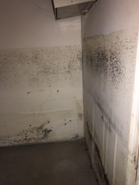 10 Things You Need to Know About Black Mold