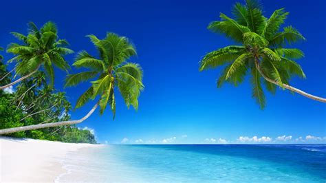 Tropical Beach Paradise 5K Wallpapers   HD Wallpapers   ID