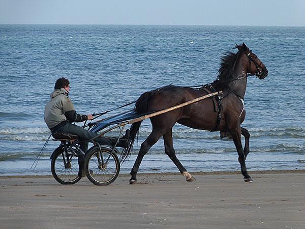 chevaux 6