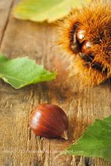 Castagna-Chestnut
