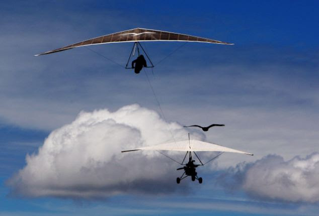 Formation flying: Mark's hang-glider and a passing paraglider get a serious once-over from the none-too-impressed eagle