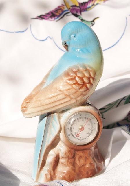 Vintage budgerigar ... with temperature gauge!