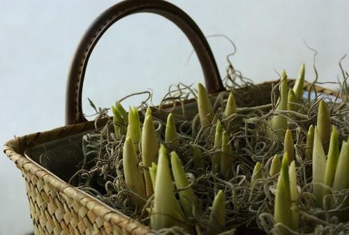 Iris Basket 29Jan10