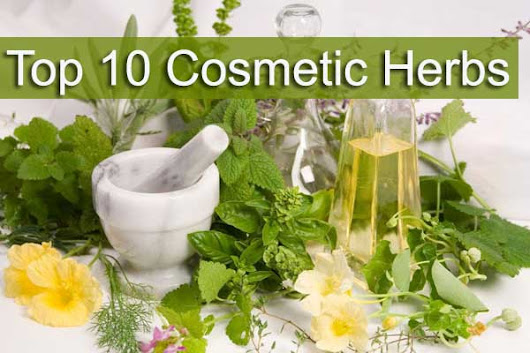 Top 10 Herbs Used in Cosmetics | Medicinal Plants