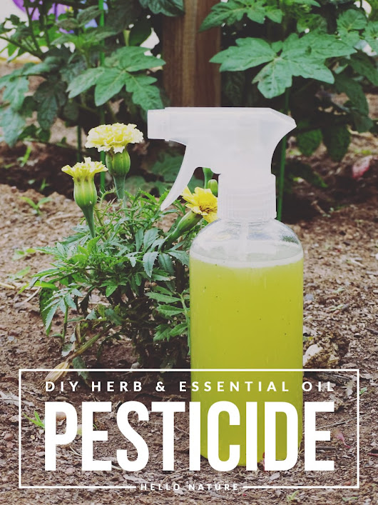 Herb and Essential Oil Pesticide DIY - Hello Nature