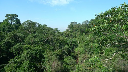 HSBC Treetop Walk