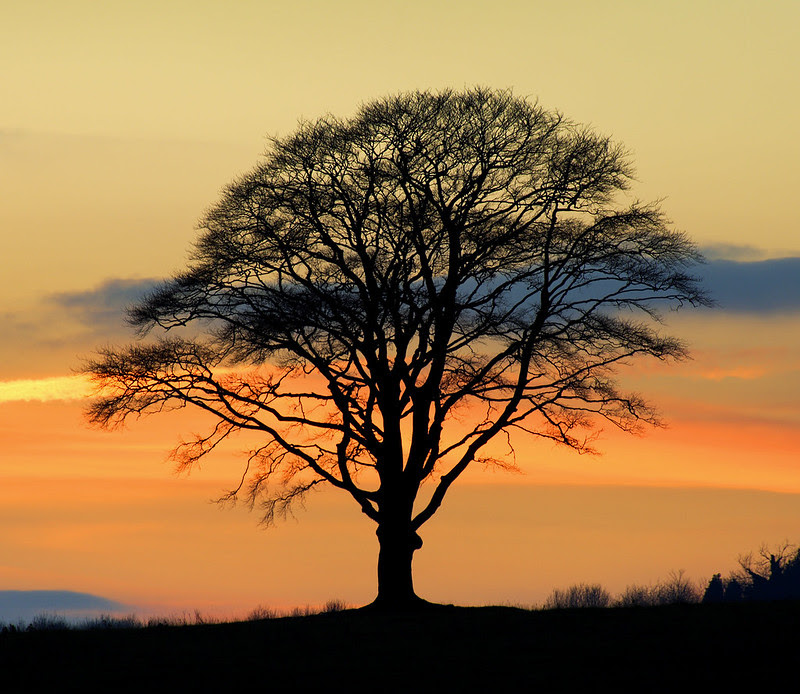 Isolated Tree, Stanmer Down