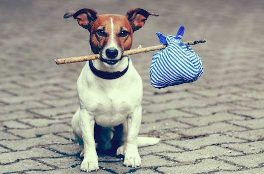 Pet Restrictions- Things To Know Before You Move Abroad