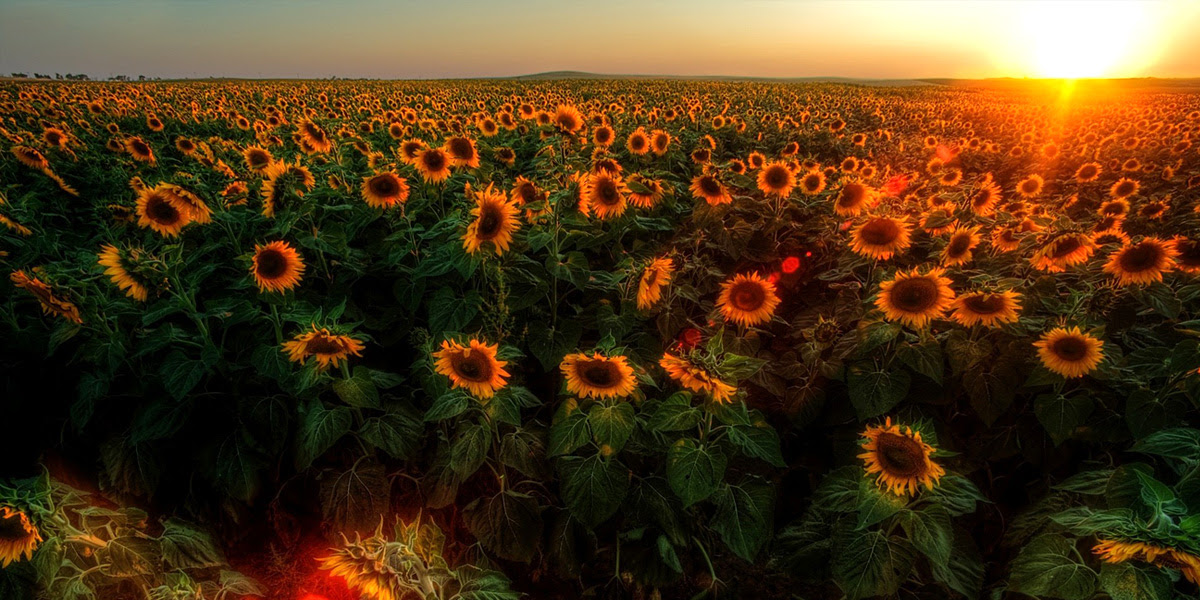 Campo De Flores Al Amanecer Tornquistdistritalcomar