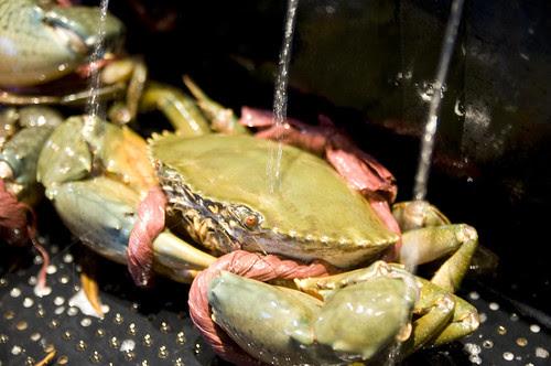 Mad Crab, Singapore Seafood Republic, Shinagawa