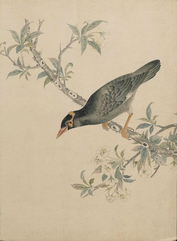 Ink + Watercolour  Bird sketch g