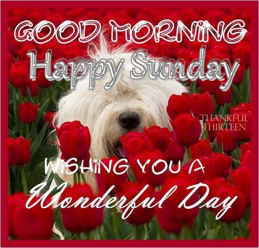 Good Morning Happy Sunday Wishing You A Wonderful Day Pictures