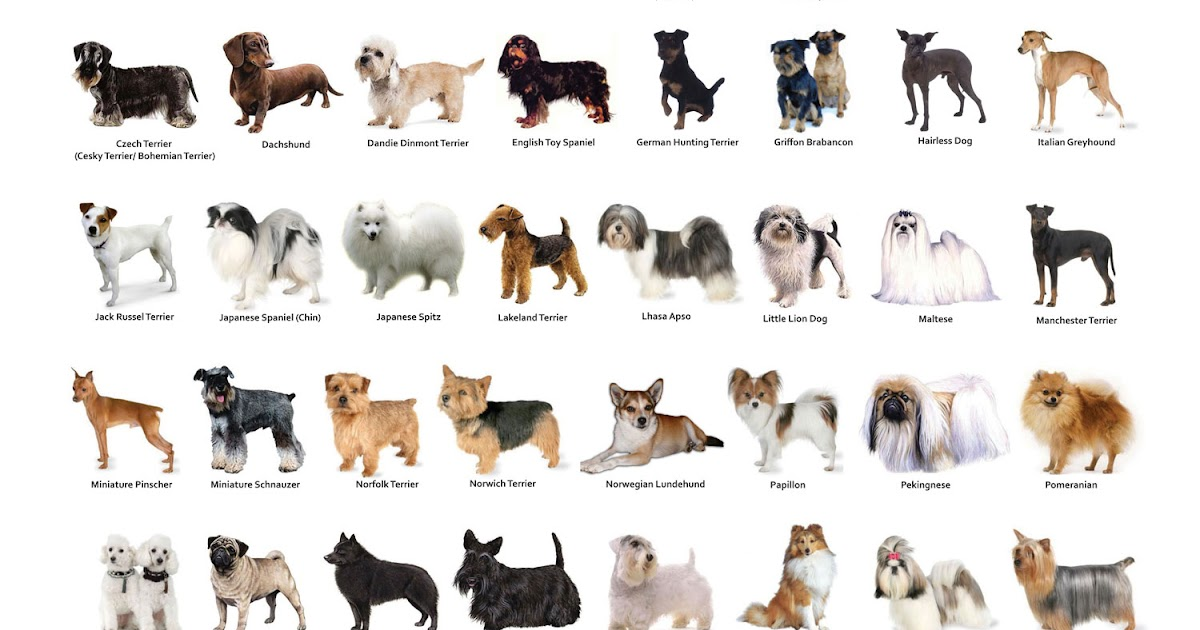 All Dogs Breeding Services