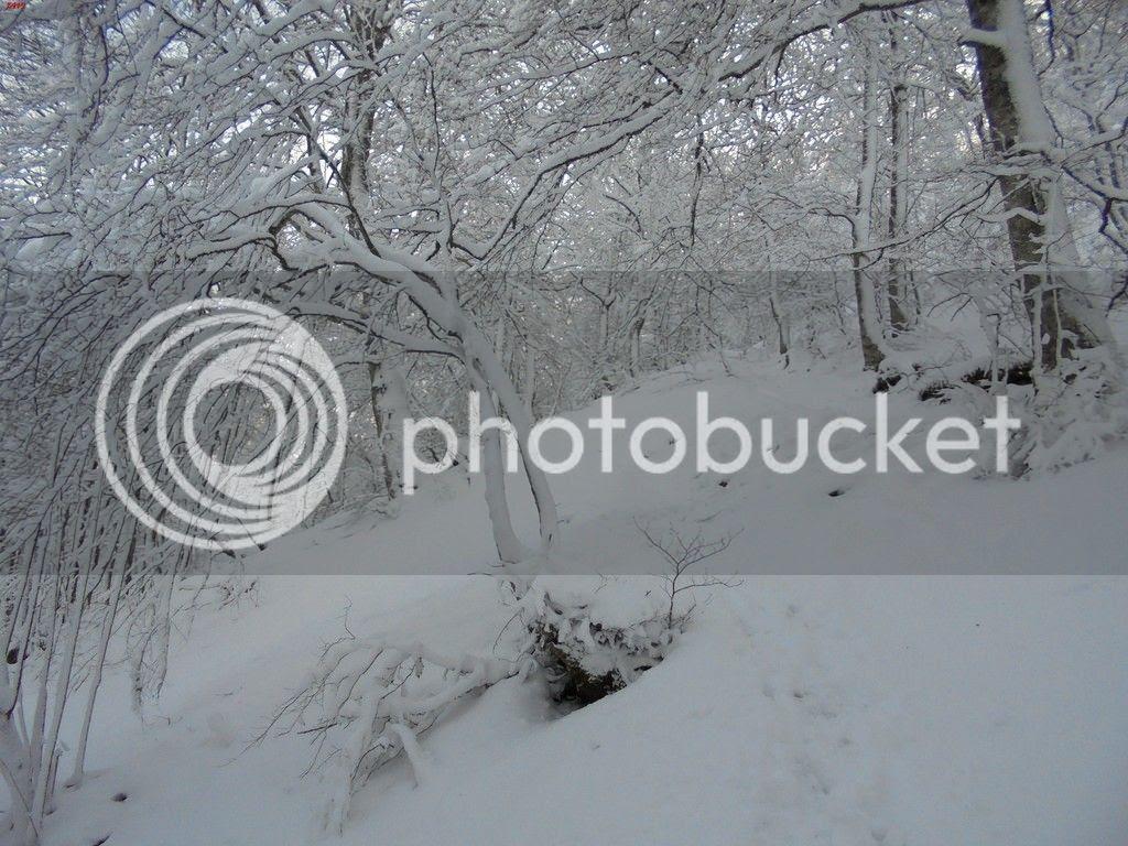 photo SAN DONATO 17-01-16 133_zpsxiwzgyy4.jpg