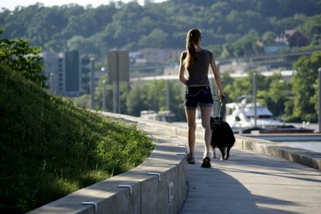 Leash in Hand? 3 Important Safety Tips For Walking Your Dog This Summer!