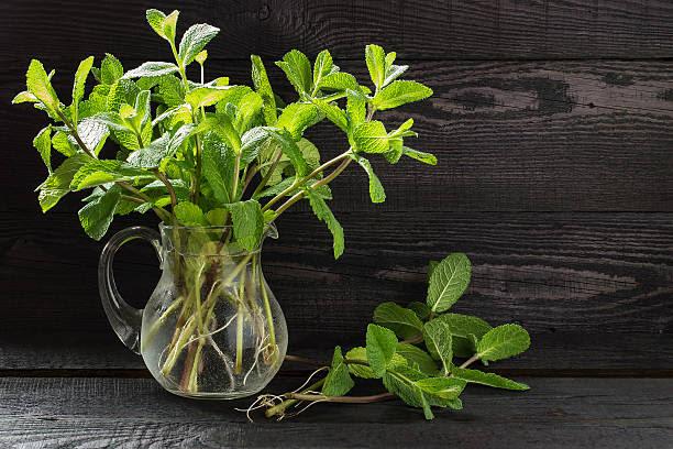 hierbas medicinales menta