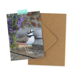 Image of LITTLE RINGED PLOVER - note card