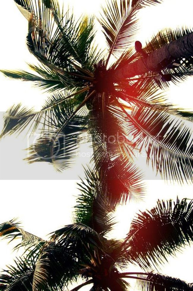 photo palmtrees_zpspi1c2qz7.jpg