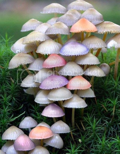 photo 12ExoticMushrooms_zps524d1662.jpg