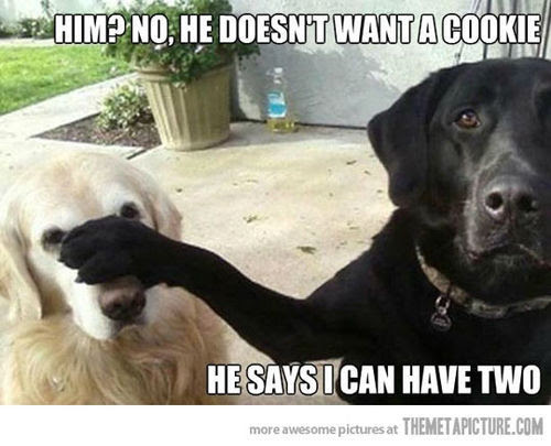 Want a cookie (dogs,funny)