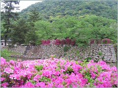 61 Tottori castle park with azaleas