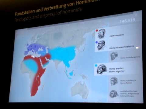 Six Million Years of Hominin Evolution in Four Minutes