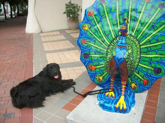 peacock-dog