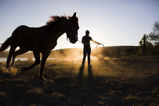 3 Entrepreneurial Lessons I Learned From Raising Horses