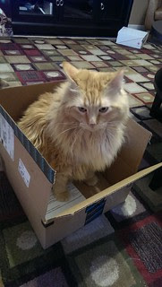 Jasper taking the box for a test ride