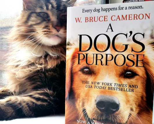 Wordless Wednesday – A Dog's Purpose
