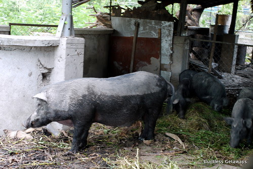 prado-farms-pampanga.jpg