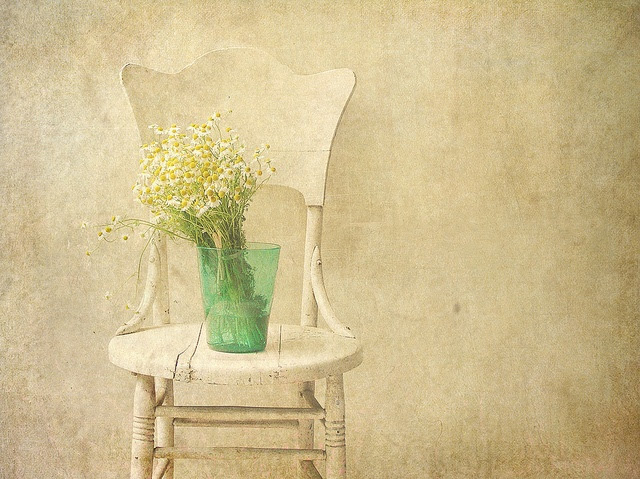 Chamomile by raewillow, via Flickr