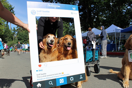 Sniff Seattle's Furry 5K 2016 Instagram Photos | SNIFF Seattle Dog Walkers