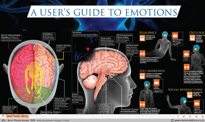 Infographic : The Brain A user's Guide To Emotions