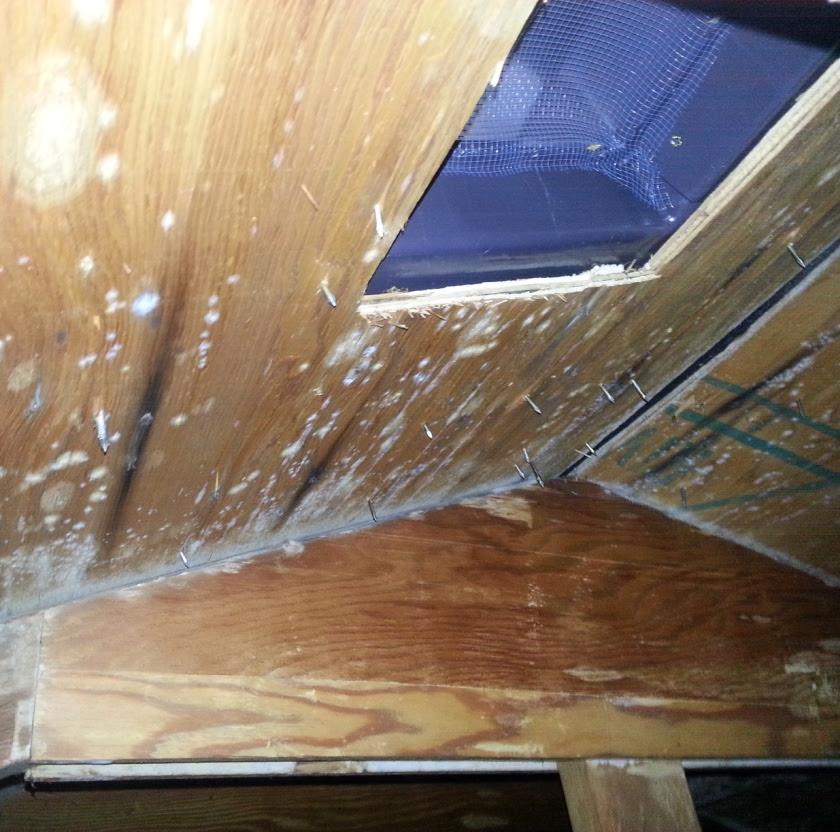white mold attic