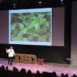 TEDxManhattan - Stephen Ritz - Green Bronx Machine - Growing Our Way Into A New Economy