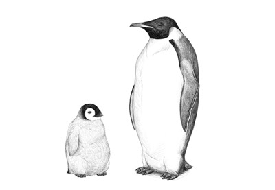 How to Draw a Penguin