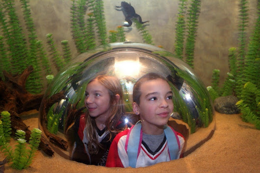 Vote - Vancouver Aquarium - Vancouver - Best Aquarium Nominee:  2014 10Best Readers' Choice Travel Awards