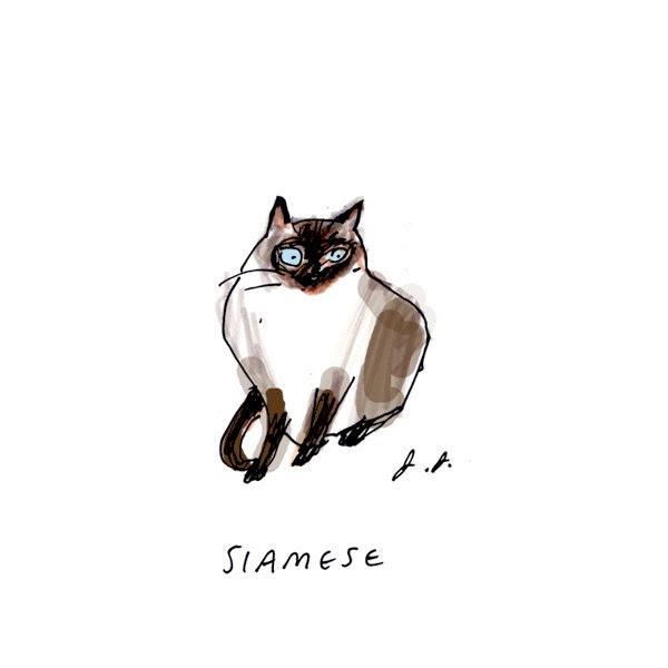 Siamese Cat Art - jamieshelman