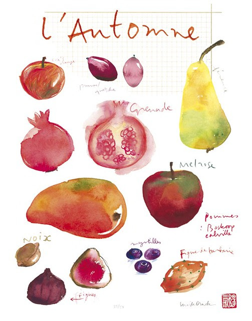 Botanical Plate Fall Fruits Print by lucileskitchen