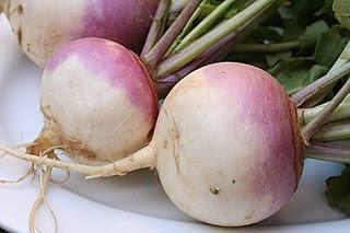 photo of turnips