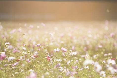 1000  Great Flower Background Photos · Pexels · Free Stock
