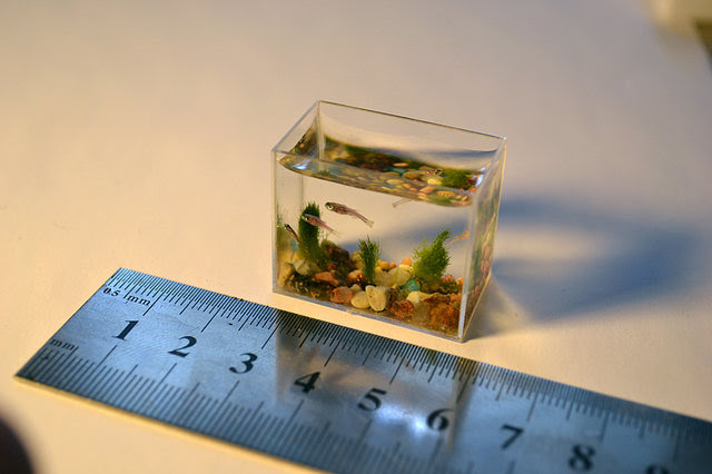 Worlds Smallest Aquarium With Fish