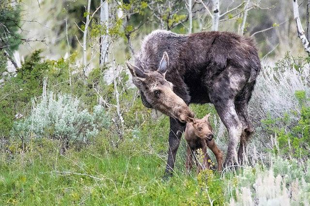 Grand Teton             National Park, Wyoming --