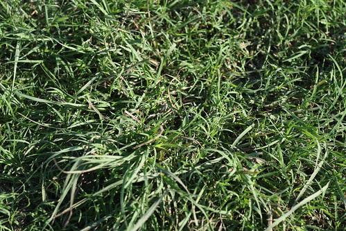 good grass