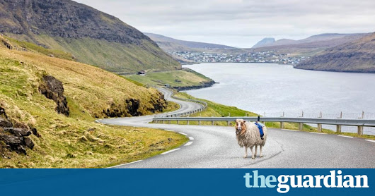 Faroe Islands fit cameras to sheep to create Google Street View | Travel | The Guardian