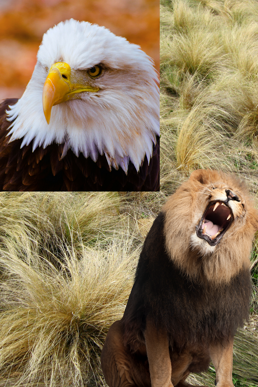 The Lion and the Eagle by Pastor Kong Hee | Thomas' Diary - A walk through my life