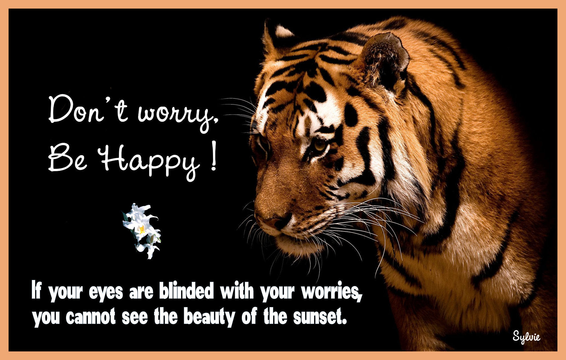 Keep Smiling Images Dont Worry Be Happy Hd Wallpaper And
