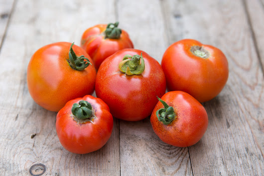 Tomatoes – Grow Guide (Step-by-Step) -