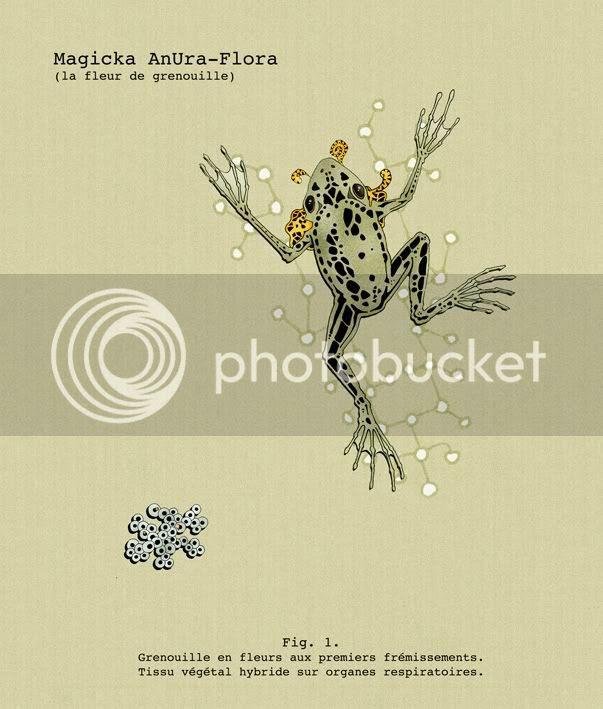 La  transmutation de l'AnUra-Flora - wladd